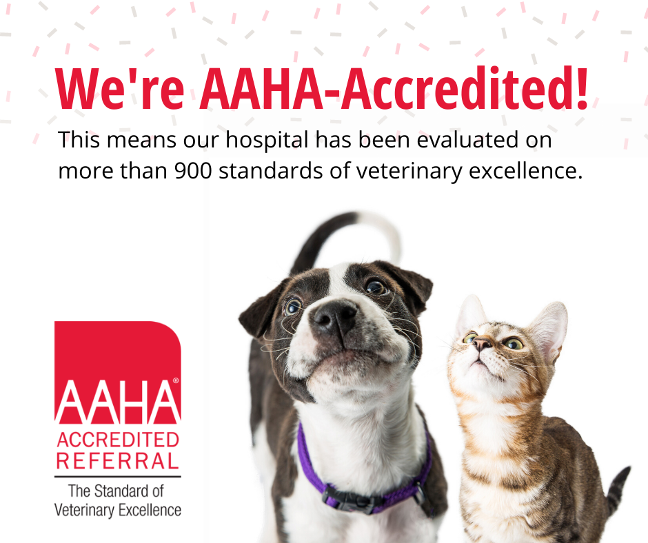 Avets is now AAHA-accredited
